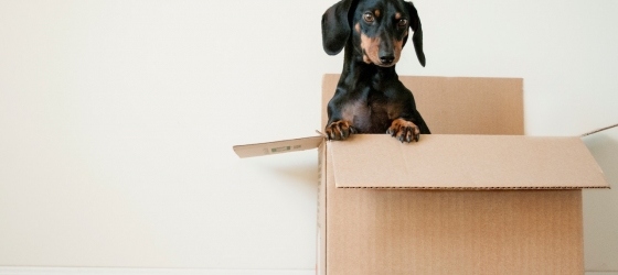 12 tips for moving day success