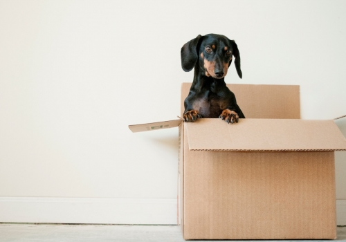 Moving house checklist: 12 tips for moving day success